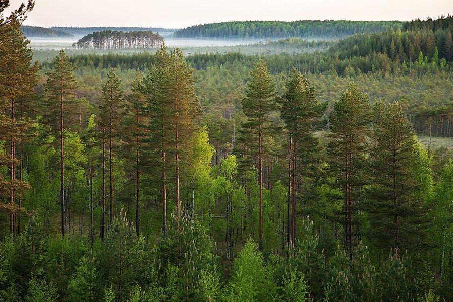 Лесопродукция, включенная в Европейское Зеленое соглашение
