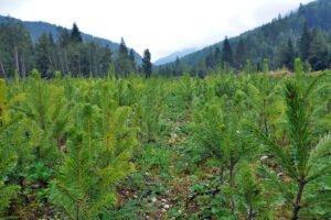 Немецкая группа потребителей древесины призывает к увеличению выращивания древесины хвойных пород
