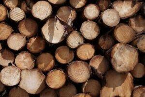 2020 год стал годом надежды для лесного сектора