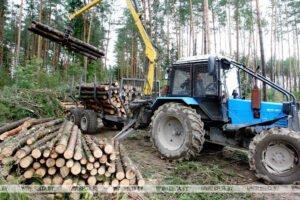 БУТБ намерена содействовать экспорту белорусской лесопродукции в Германию