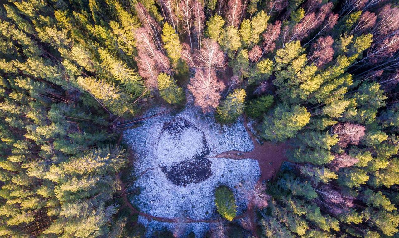 Эстония: Снижение объема рубки леса приведет к потере рабочих мест