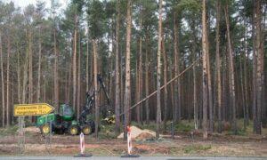 Німецький суд ухвалив рішення зупинити вирубку лісу на місці будівництва заводу Tesla під Берліном