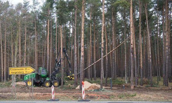 You are currently viewing Німецький суд ухвалив рішення зупинити вирубку лісу на місці будівництва заводу Tesla під Берліном