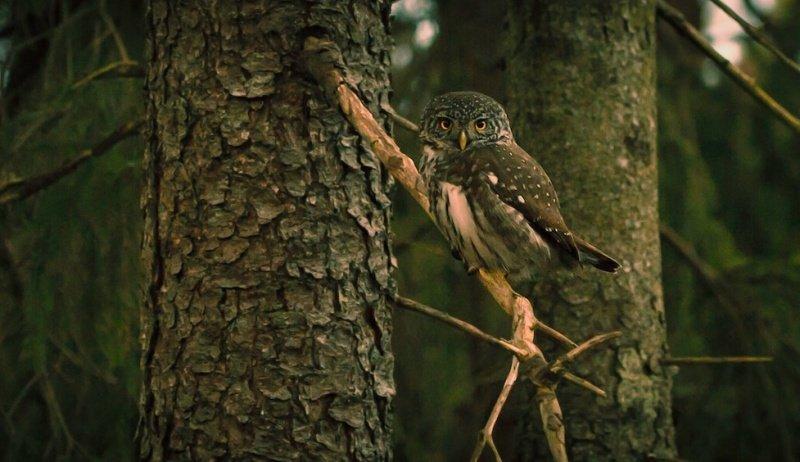В управляемых лесах Германии увеличивается численность и разнообразие исчезающих видов птиц