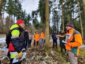 Лесники Европы помогают друг другу в борьбе с короедом