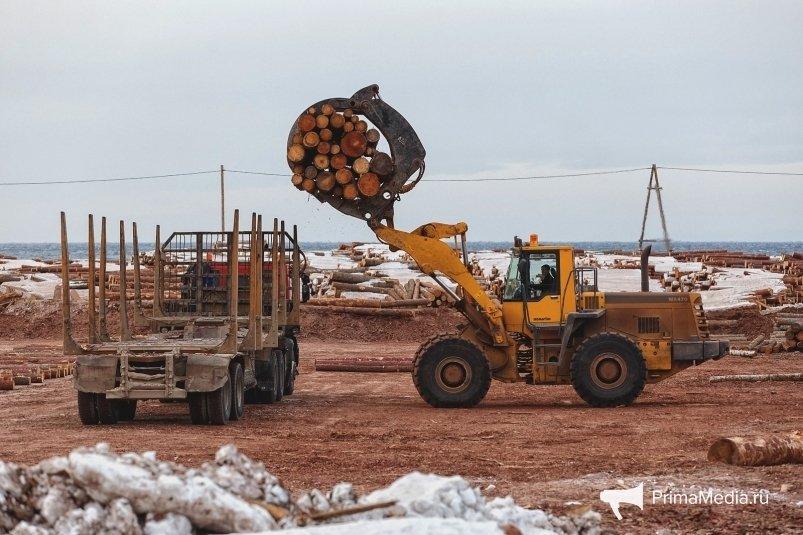 Об ограничениях Китая для российского леса «пострашнее коронавируса» сообщили в ПАЛЭКС