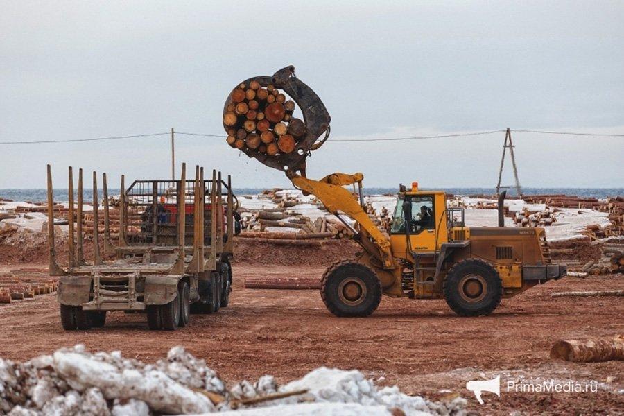 You are currently viewing КНР ужесточила фитосанитарный контроль лесного экспорта