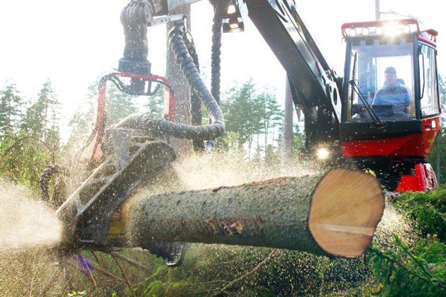 Мягкая погода влияет на планирование заготовки леса в Сёдре
