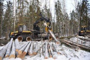 Лесозаготовка хвойной древесины упала на 5%