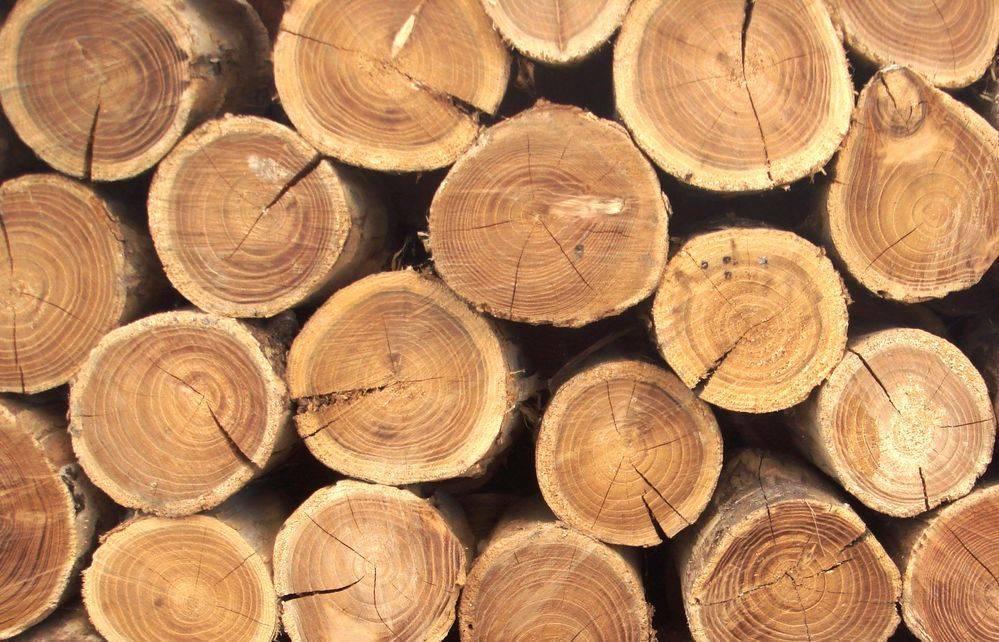 В Приднестровье введён запрет на вывоз древесины и изделий из неё