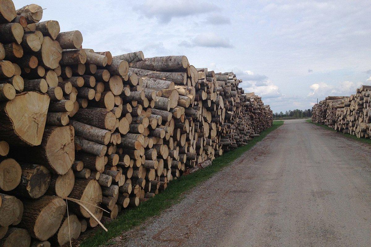 В Украине создан арбитражный совет по запрету экспорта древесины