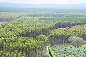 Norske Skog продаст 18 тыс. га леса в Австралии