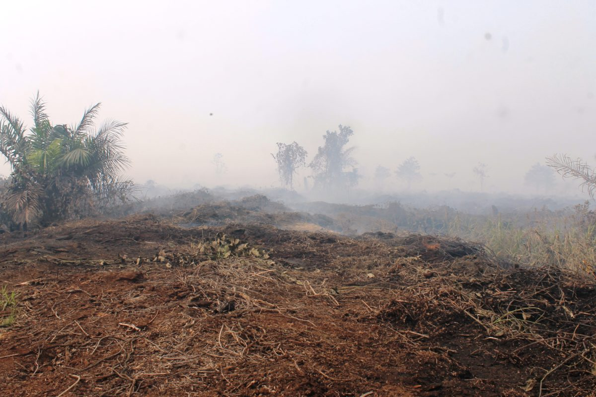 Индонезия подает в суд на  компании по производству балансовой древесины и пальмового масла