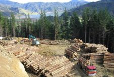 Задержка перевалки круглого леса в китайских портах ставит под угрозу экспорт бревен Новой Зеландии