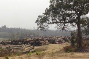 Власти Мьянмы готовы сотрудничать со следствием в Голландии
