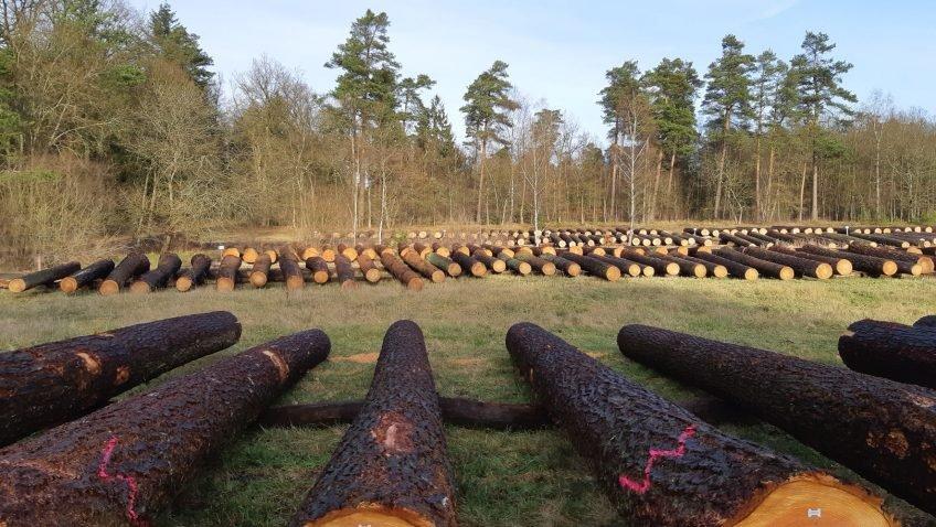 Аукцион ценной хвойной древесины на севере Германии