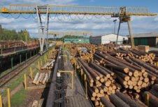 Украина: О реализации экспериментального проекта по проведению электронных аукционов по продаже необработанной древесины