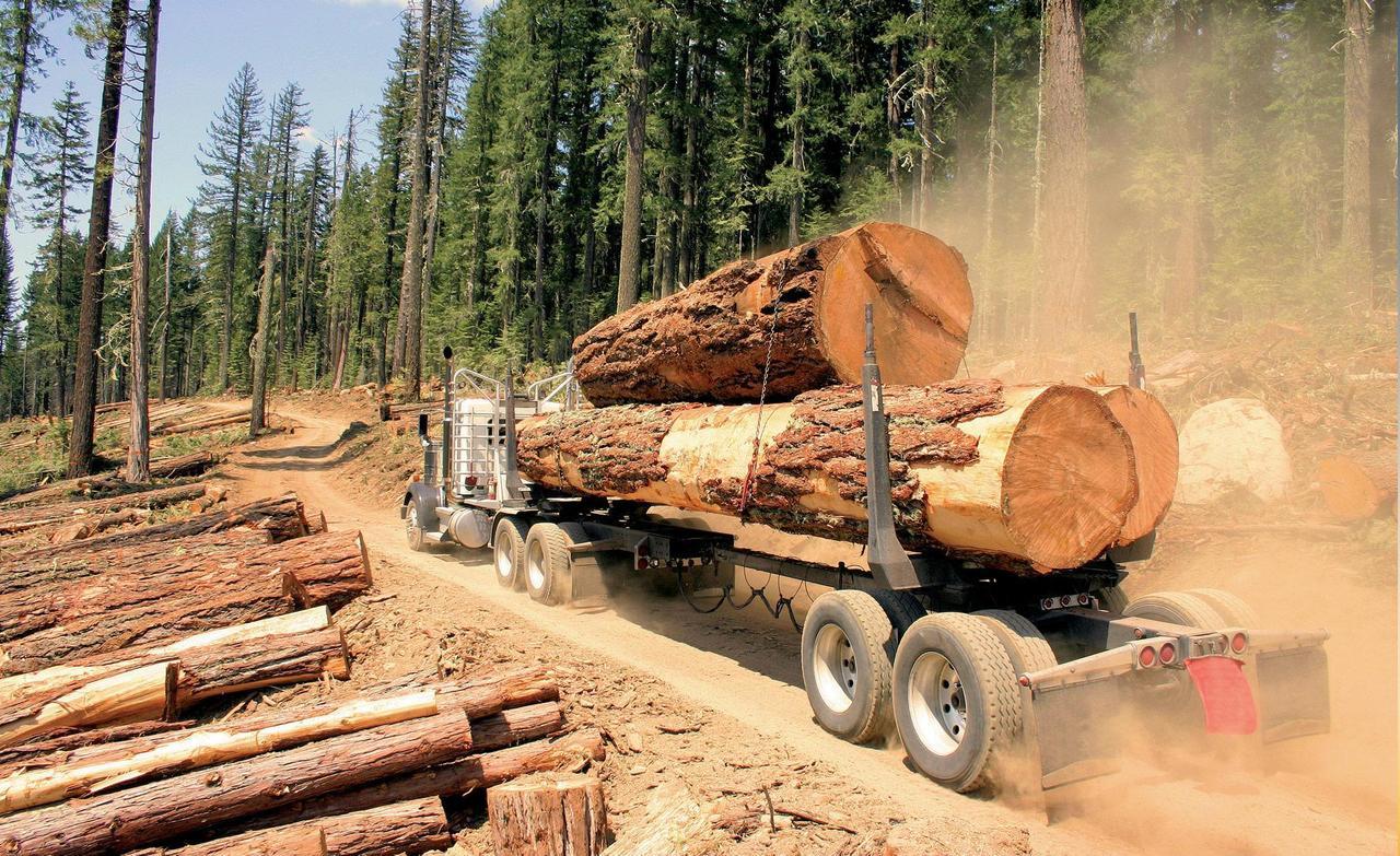 Правительство Литвы одобрило новый порядок продажи древесины