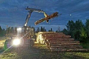 Швеция: снижение оборота из-за снижения цен и объемов реализации круглого леса