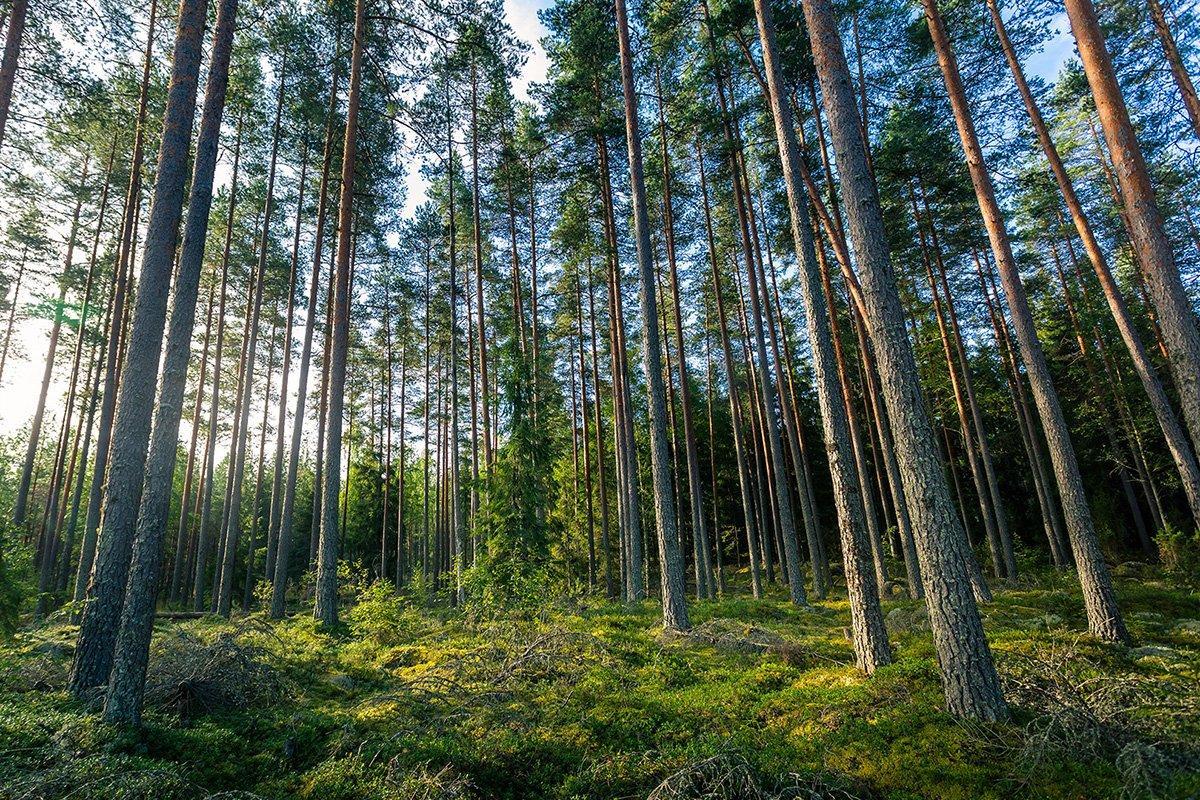 «Зеленый курс» ЕС создает новые возможности для древесины