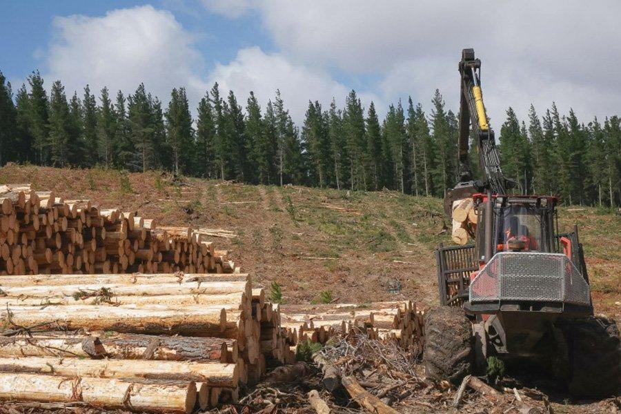 В австралийском штате Виктория запретят рубить лес