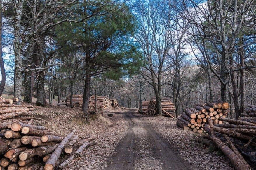 Кабмин: закупать древесину первыми смогут переработчики Литвы