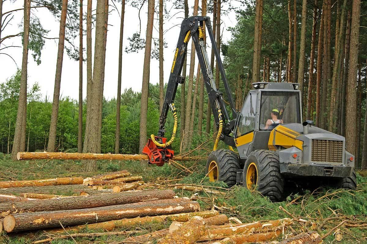 Заготовка сосны возобновится на лесопильном заводе Бравикен