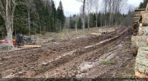 Погода мешает заготовке леса в Латвии