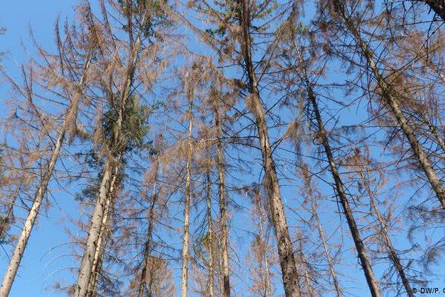 В Чехии ожидает до 60 млн. м³ поврежденной древесины