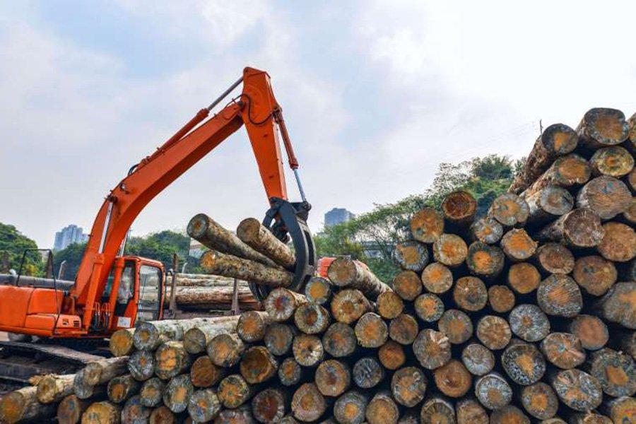 Коронавирус: лесной сектор Новой Зеландии вряд ли вернется к нормальному состоянию в течение шести месяцев