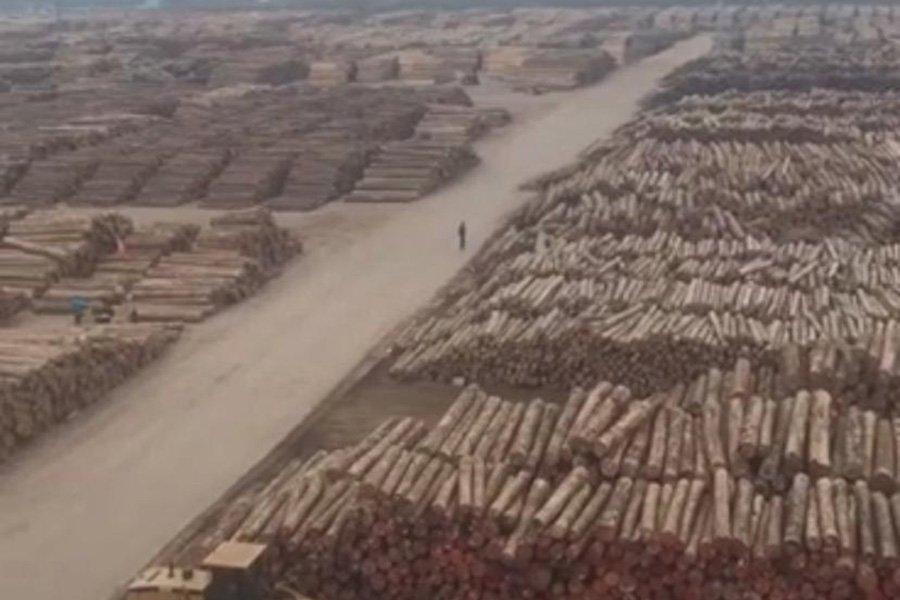 Коронавирус: поставки круглого леса в Китай затруднены; бревна застряли в портах, а цены растут