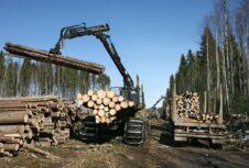 Лесозаготовительные компании испытывают трудности в России из-за теплой зимы; ожидается рост цен на древесину на 20%