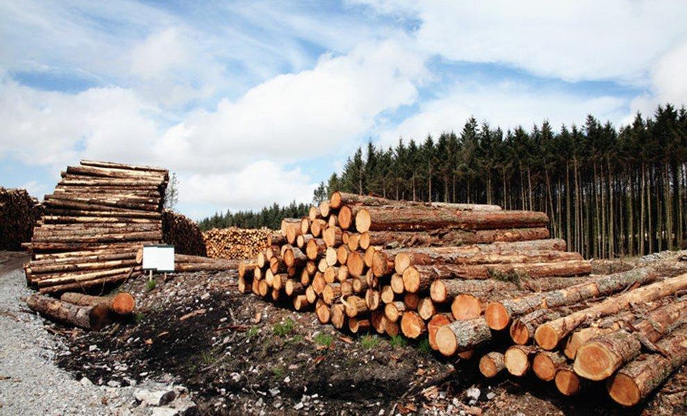 Новая Зеландия: экспорт круглого леса остановился