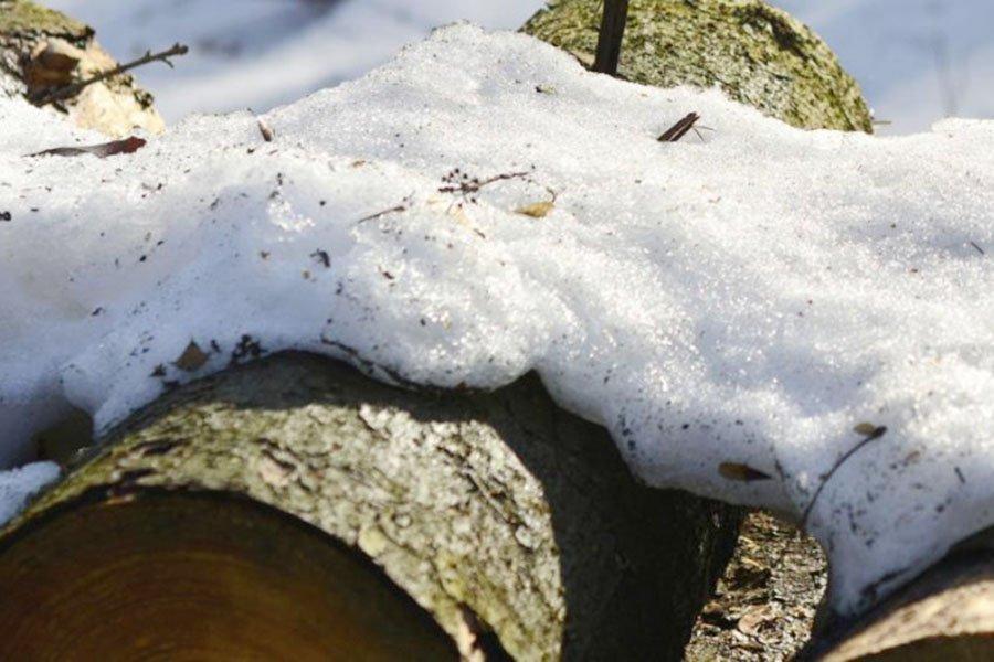 You are currently viewing Лесопромышленники ожидают роста цен на древесину из-за аномально теплой зимы