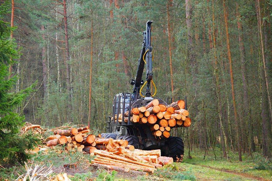 В январе 2020 г. Финляндия сократила заготовку древесины на 20%