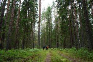 Россия вышла на первое место в мире по площади FSC-сертифицированных лесов