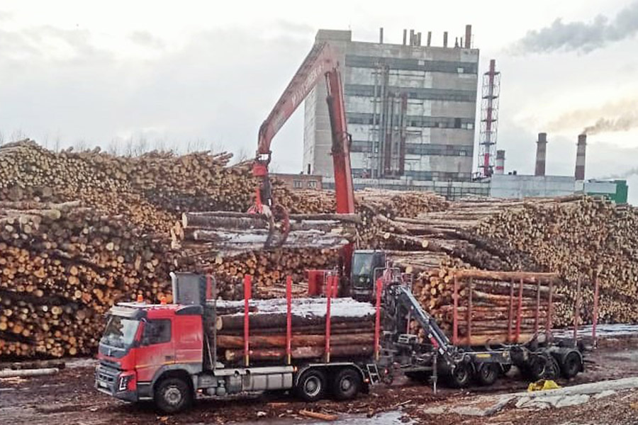 Цены на круглый лес в России резко упали в феврале 2020 года