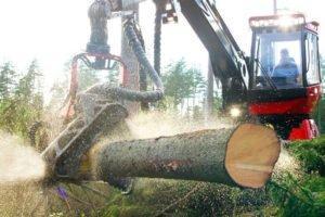Норвегия: цены на круглый лес еще больше упали