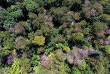 Большая засуха в апреле предвещает третий год подряд нашествие короеда на немецкие леса