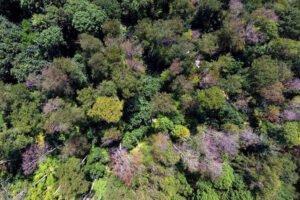 Read more about the article Большая засуха в апреле предвещает третий год подряд нашествие короеда на немецкие леса