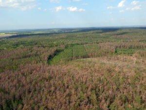Чехия: Пандемия коронавируса станет последним   гвоздем в гробу наших лесов