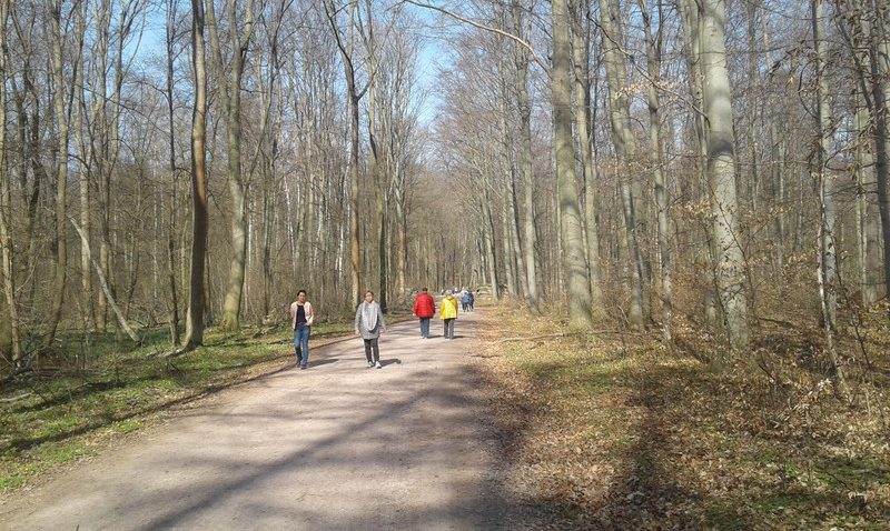 Германия: Лес и охота в условиях пандемии