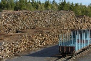 Финляндия: цены на круглый лес поднялись в марте
