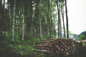 Новая публикация: «Кто владеет нашими лесами? Право собственности на леса в регионе ЕЭК»