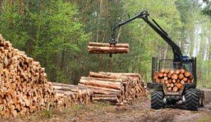 Деревообрабатывающая промышленность Франции останавливает производство