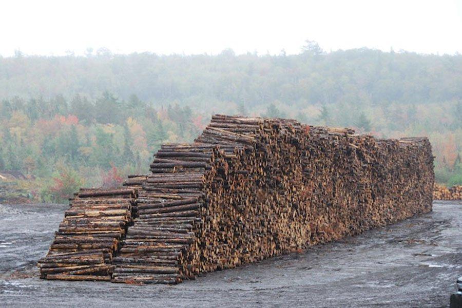Бумажные фабрики начинают сокращать потребление балансовой древесины