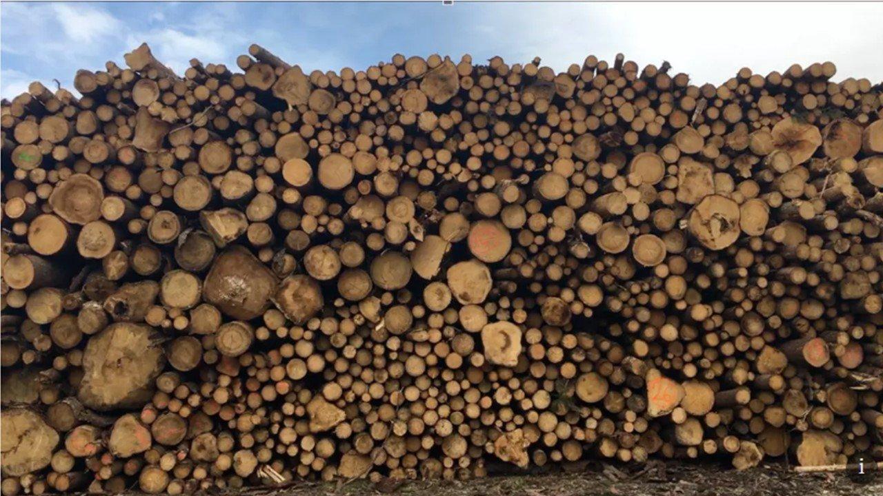 Китай вновь спасает лесовладельцев Чехии