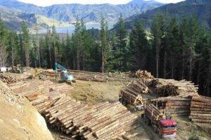 Лесная промышленность возвращается к работе — NZFOA