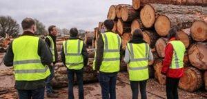 Новое исследование Великобритании показывает снижение спроса на древесину
