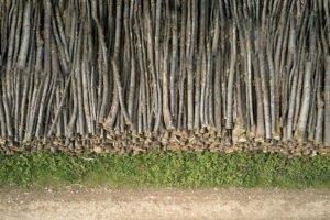 Виртуальная глобальная конференция по лесоматериалам